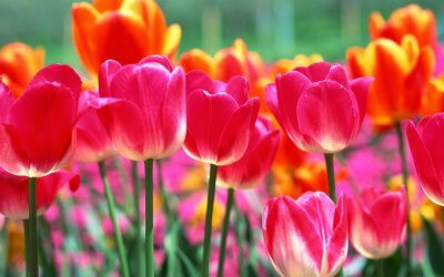 Hooray for May
